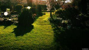 Hunde Garten