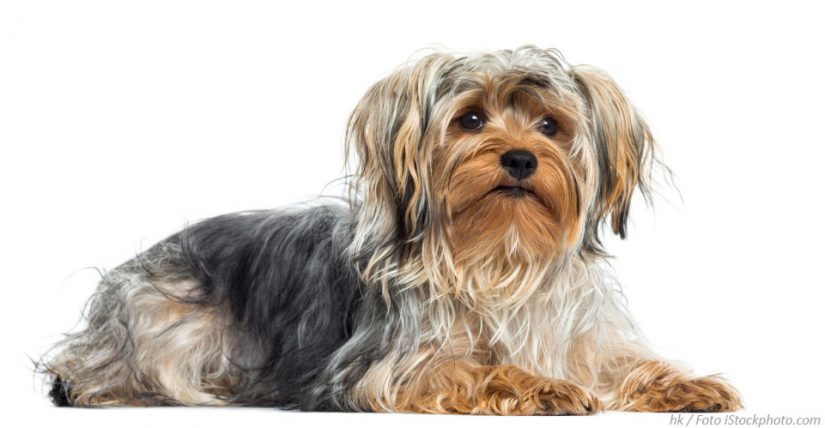 Wo kann ich Hunde kaufen in Österreich – Worauf sollte man achten?