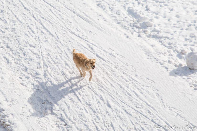 Hundekot auf den Pisten