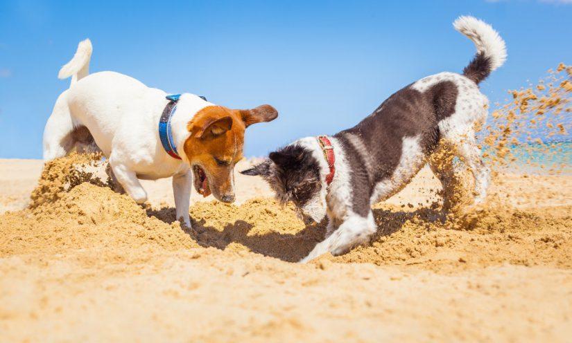 Hundeurlaub in den Ferien – Reise mit dem Auto