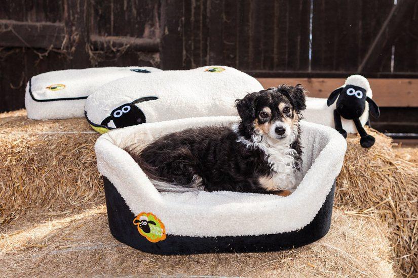 Shaun das Schaf: Trixie Produkte für Hunde & Hundehalter
