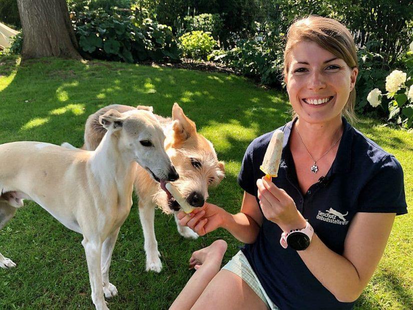Hundeeis: Köstlicher und unbedenklicher Sommer-Schleckspaß selbst gemacht
